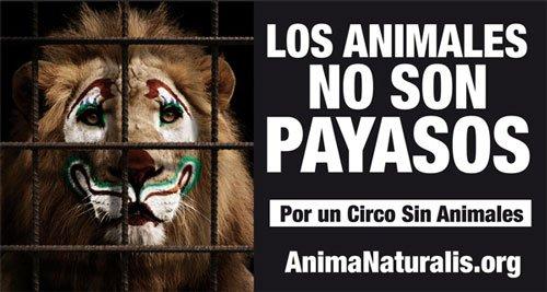 campañas contra el maltrato animal